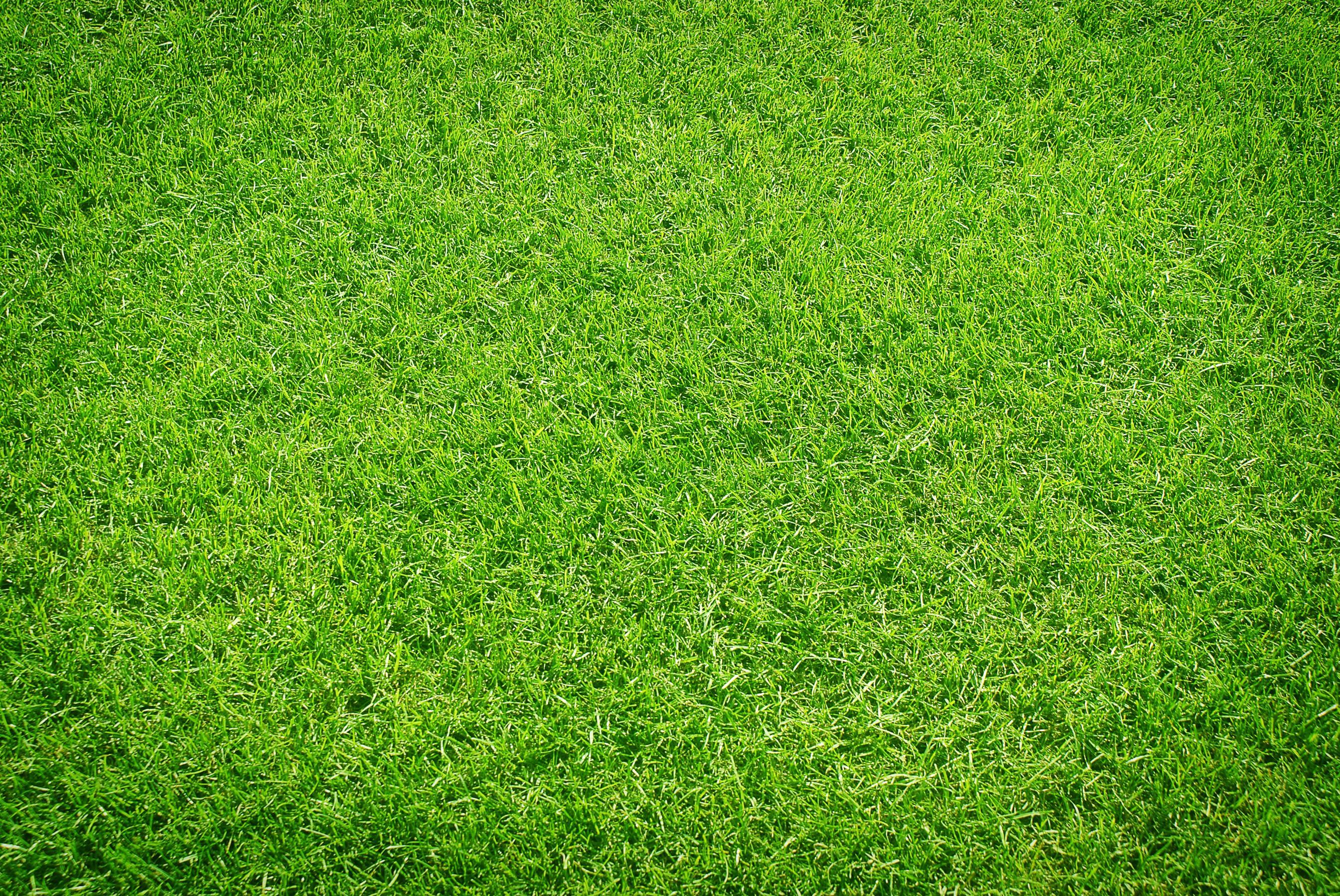 Grass ()