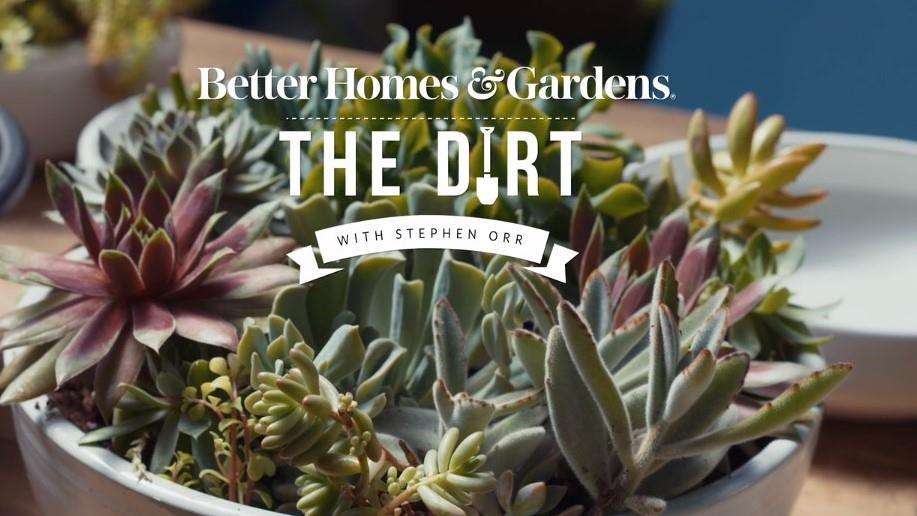 The Dirt ()