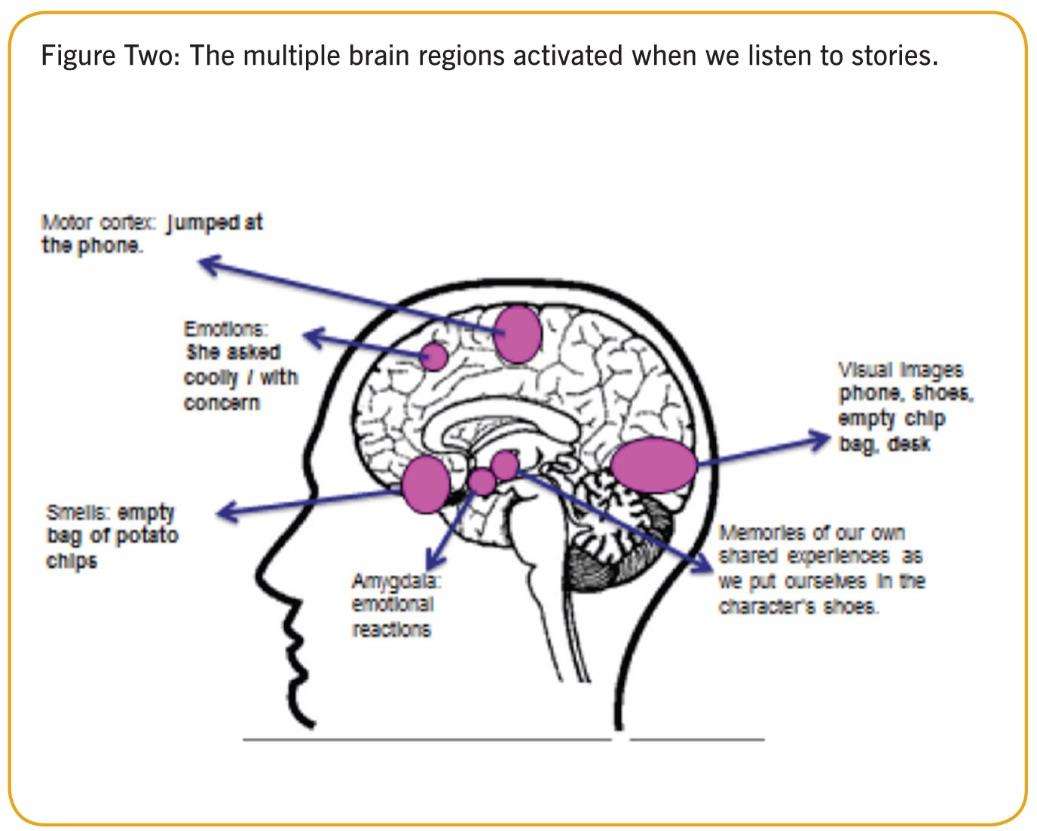 Brain regions figure two ()