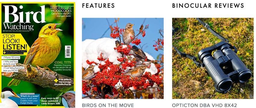 Bird Watching Bauer ()