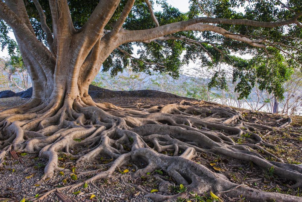 Tree ()