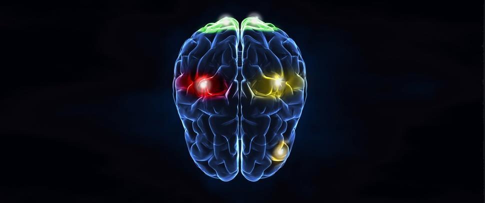 Brain ()
